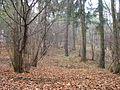 Минский лес - panoramio.jpg