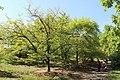 Національний ботанічний сад ім. М.Гришка Магнолії 01.jpg