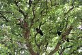 Павлинье дерево. Filerimos. Rodos. Greece. Июнь 2014 - panoramio.jpg
