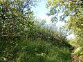 """Парк шума """"Гази Баба"""" 29.jpg"""