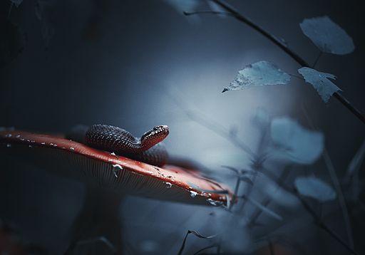 Повний загадок ліс дрімучий
