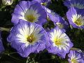 Растения в Седово 228.JPG