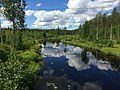 Река Тумба 3.jpg