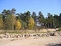 Репино - panoramio (15).jpg