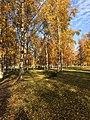 Сад Бенуа осенью.jpg