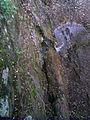 Скелі МоДРу - джерело в скелі.jpg