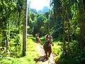 Слоновой тропой(Исм.Альберт) - panoramio.jpg