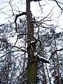 Чернечий Ліс 2.jpg