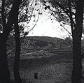 """הרי יהודה - מיערות הקק""""ל, מבט בין שני עצים.-JNF030491.jpeg"""