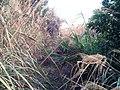 初探吊神山-越野车穿越探路20130206 - panoramio (4).jpg