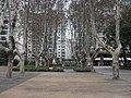 南京雅居乐小公园五十年梧桐树 - panoramio.jpg
