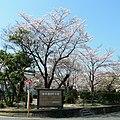 梅の里3号公園 2012.4.12 - panoramio.jpg