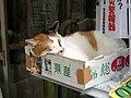 阿佐ヶ谷の八百屋の猫 レタス (4134975089).jpg