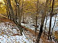 -Forest near Fioletovo village S-N 05.jpg