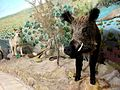 051-Mozeh Tarikh Tabiei گراز، موزه تاریخ طبیعی قم.jpg