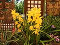 05441jfMidyear Philippine Orchid Show Quezon Memorial Circlefvf 04.JPG