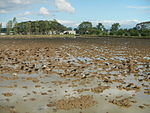 09461jfRoads Paddy fields Domesticated ducks Paligui Candaba Pampangafvf 26.JPG