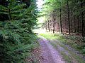 1.88 km Forstweg.jpg
