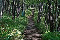 140829 Track Near Furepe Falls Shiretoko Hokkaido Japan10n.jpg