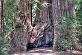 16 21 0030 redwood.jpg