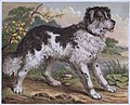 1875-esquimaux-dogs 05.jpg