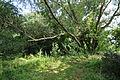 2011-07-10-parsteinsee-by-RalfR-15.jpg