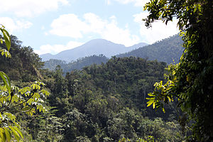 Turquino National Park - Cuban moist forests in Turquino National Park.