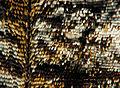 2013-04-30 15-02-08-aile-papillon-7f.jpg
