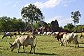 201312161450b (Hartmann Linge) Sukhothai Phra Phai Luang.jpg