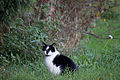 20141102- Black and White Cat by sebaso 04.jpg