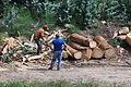 2014 Coa machada na madeira. O Rosal. Galiza-2.jpg