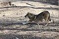 2018-04-04 Wildpark Güstrow 23.jpg