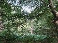 2018-07-27 Cottage woods, Northrepps (2).JPG