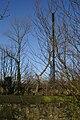 21st Century Logging-03 - geograph.org.uk - 129643.jpg