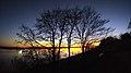 5 Trees - Flickr - greenoid.jpg