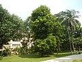 71Mehan Garden Ermita Manila Universidad de Manila 38.jpg