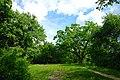 80-385-5009 Kyiv Krister Forest SAM 9918.jpg