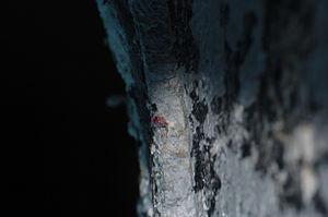 AKA Red Sea Squirt (3 of 3).jpg