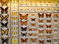 AMNH butterfly conservatory 2.jpg