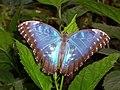 A Butterfly - geograph.org.uk - 844289.jpg