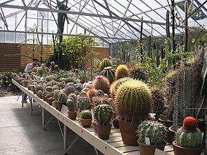 Desert Garden Conservatory - Interior View of the Desert Garden Conservatory
