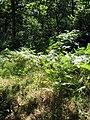 A Norfolk jungle - geograph.org.uk - 895732.jpg