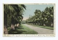 A Palm Bordered Drive, California (NYPL b12647398-67852).tiff