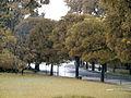 A chuva a tarde Parque Ibirapuera 1.JPG