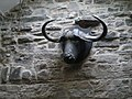 A load of bull (inside the Green Dragon pub, Hardraw) - geograph.org.uk - 831955.jpg