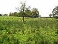 A lone tree - geograph.org.uk - 563169.jpg