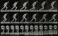 A man pulling a roller. Photogravure after Eadweard Muybridg Wellcome V0048699.jpg