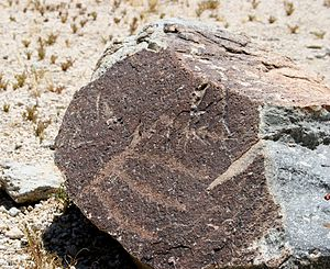 Grapevine Canyon Petroglyphs - Image: A small rock with petroglyph