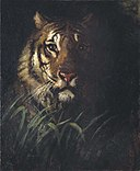Abbott Handerson Thayer - Tiger's Head - 2000.50 - Smithsonian American Art Museum.jpg