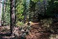 Abineau Trail is a steep 1,800 foot climb over two miles up the slopes of the San Francisco Peaks through Abineau Canyon. The trail meets the Waterline Trail at the top, which can be followed down to (22059061825).jpg